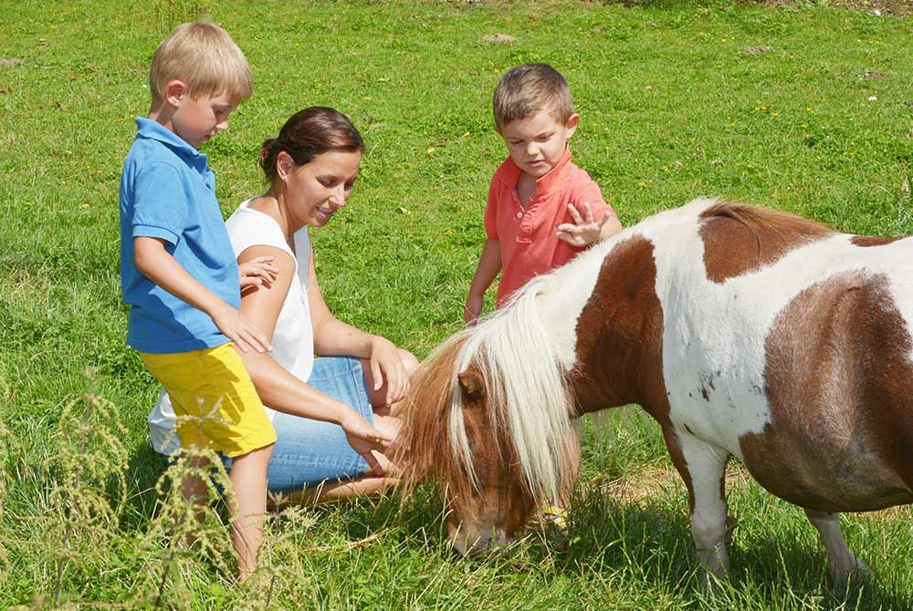 Urlaub mit Kindern in Bayern auf dem Arterhof
